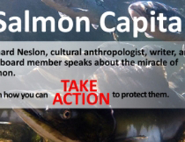 Photo for Salmon Capital:  The Tongass National Forest