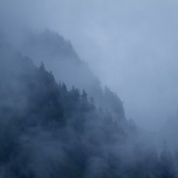 foggy_tongass.jpg