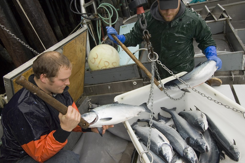 Photo for Supporting Fisheries Research in Alaska