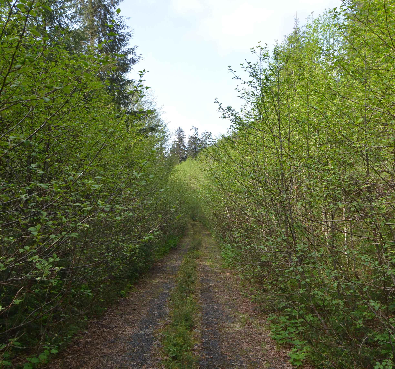 Photo for Is the Katlian Bay Road Really a Good Idea?