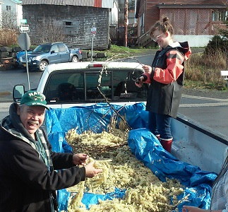 Photo for Herring Harvests: the Good, the Bad, and the (Not So) Ugly, Part 1
