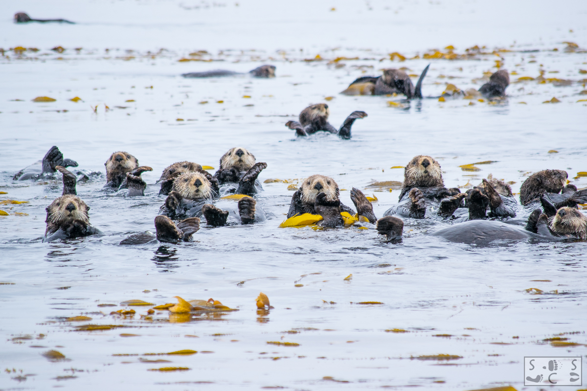 otters_(1_of_1).jpg