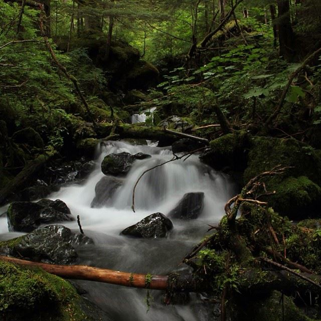 Tongass_stream_(1).jpg