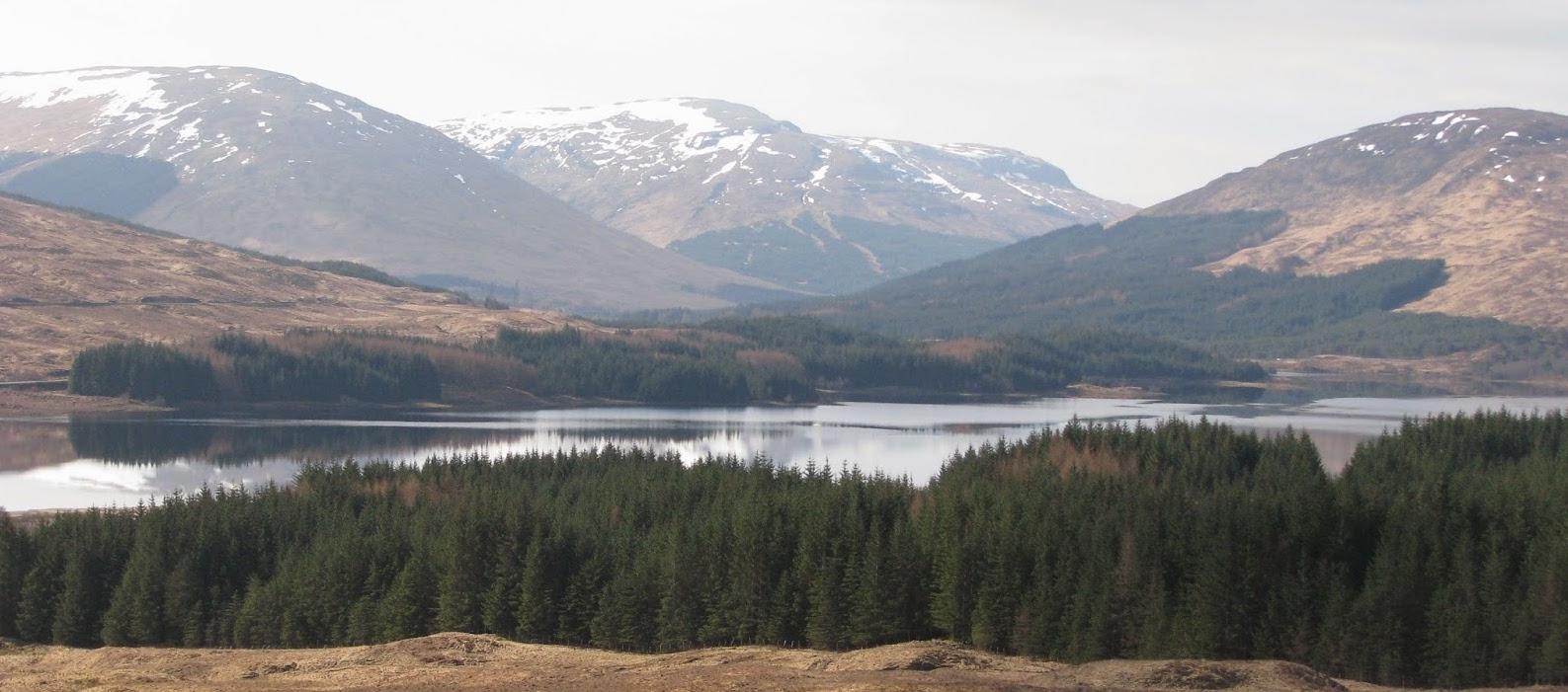 Sitka_Spruce_Scotland.JPG