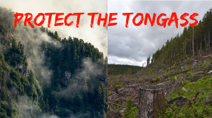 Protect_the_Tongass_Hike_Clearcut_Banner.png