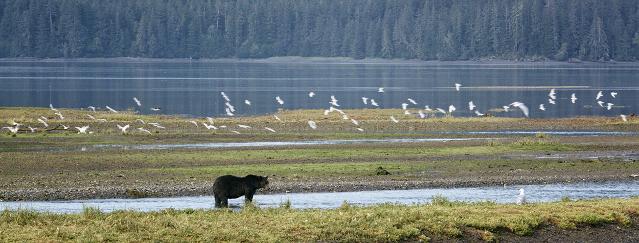 Opinion: Trump and the U.S. Forest Service undermine the truth, putting Alaskan ways of life at risk