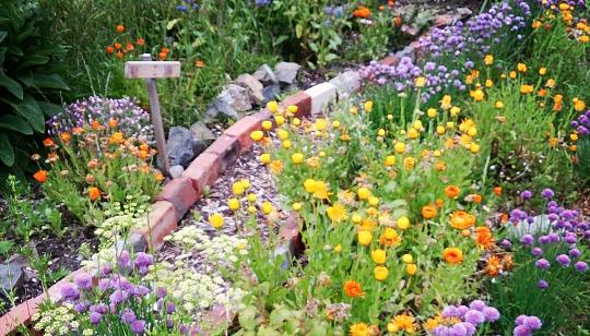 SHSC_garden.JPG