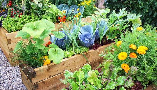 Small space edible gardens