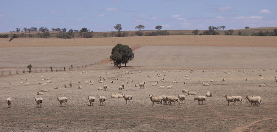 Tasmanian farm in drought
