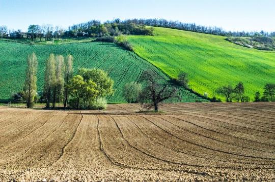 Farm paddocks