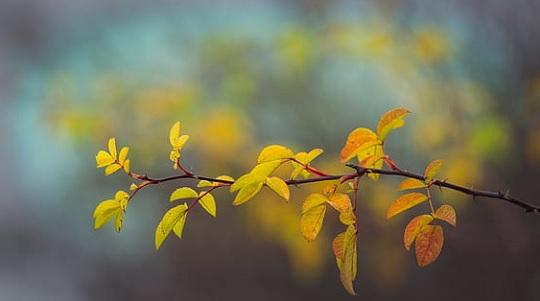 New leaf growth