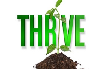 Plant thriving.