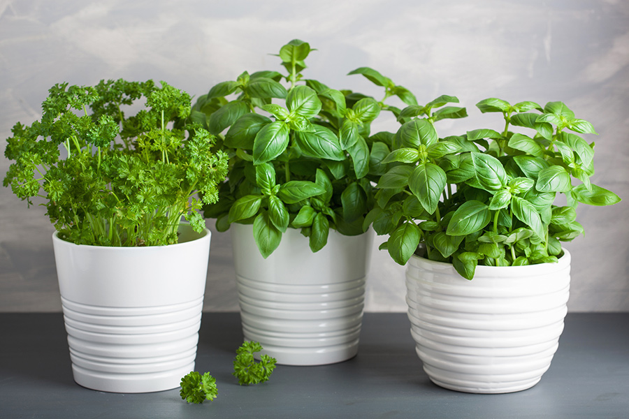Can you really grow an edible garden indoors year-round?
