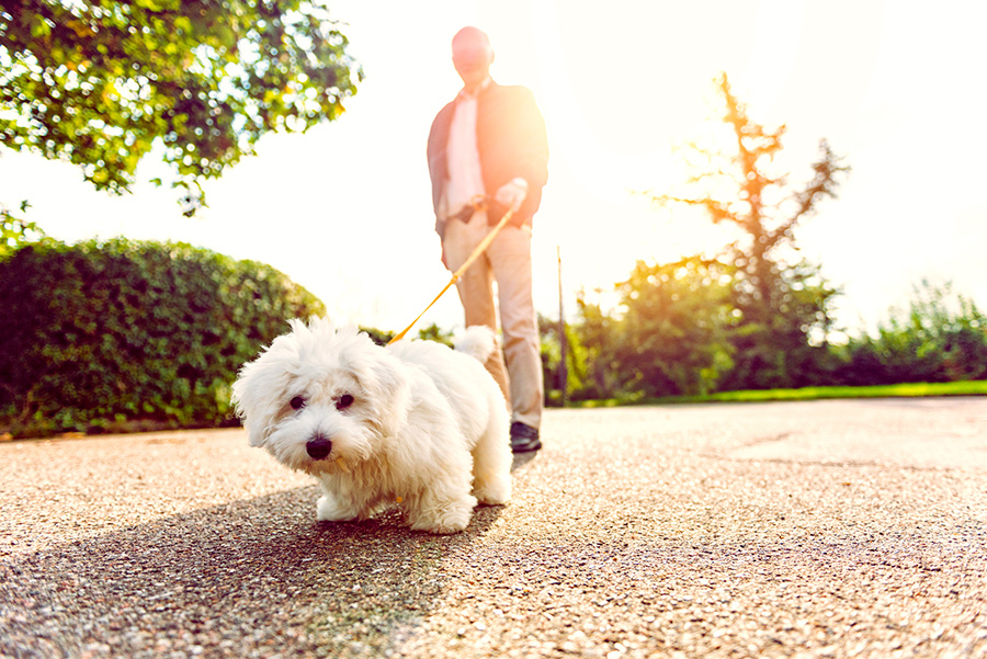 Your Pet Can Help You Be More Active