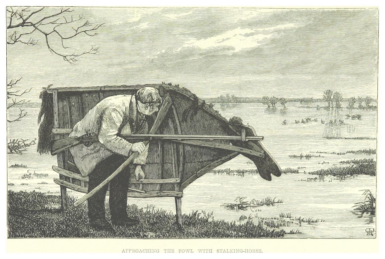 Stalking-Horse.jpg