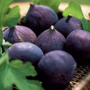 figs-m