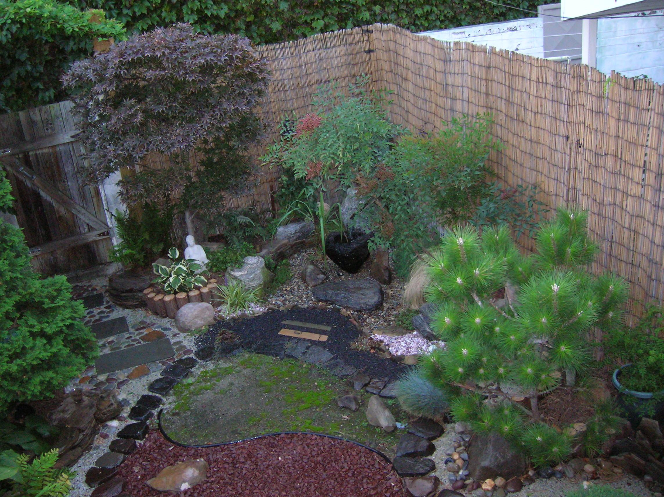 accidental_tea_garden.JPG