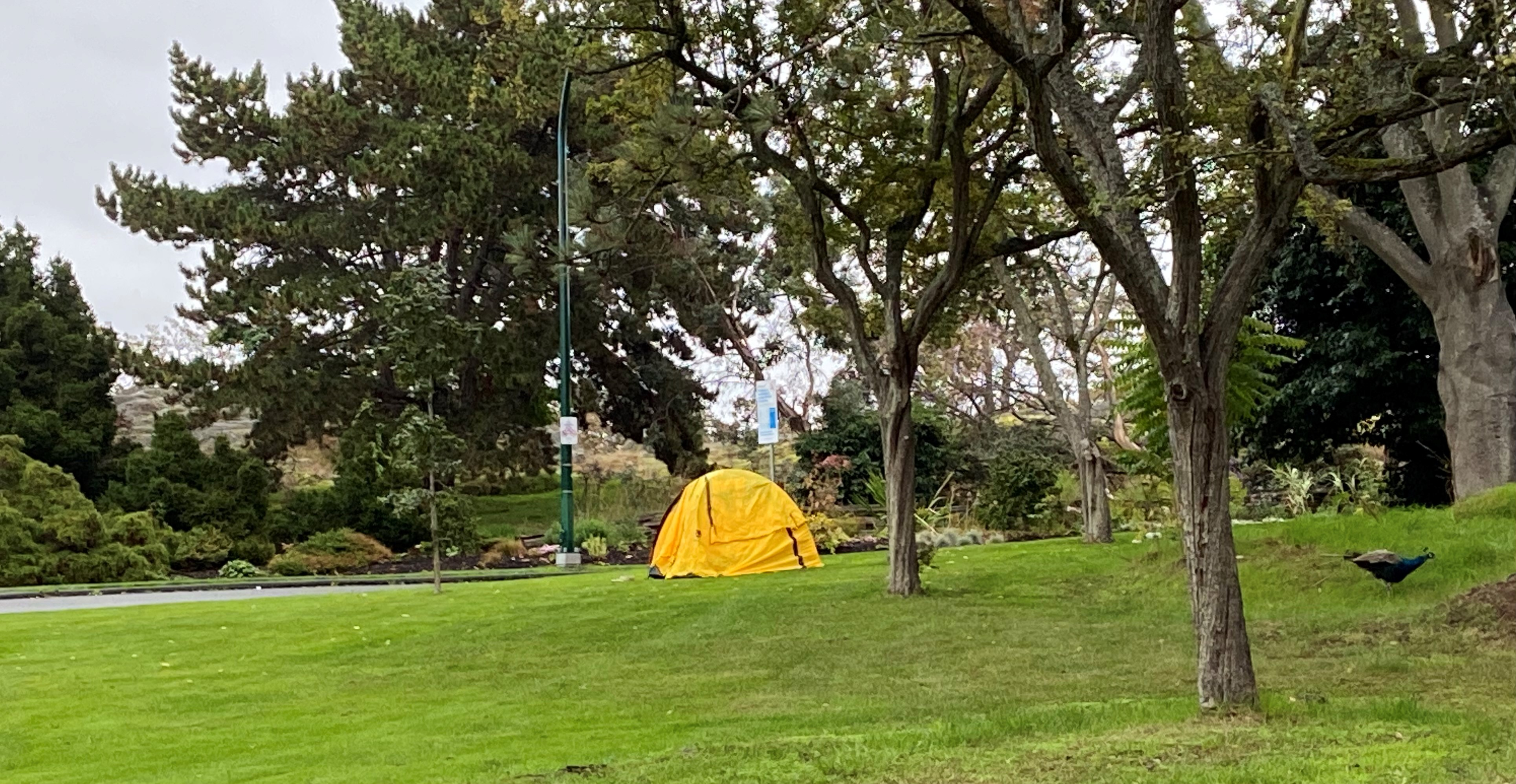 Tent in Beacon Hill Park