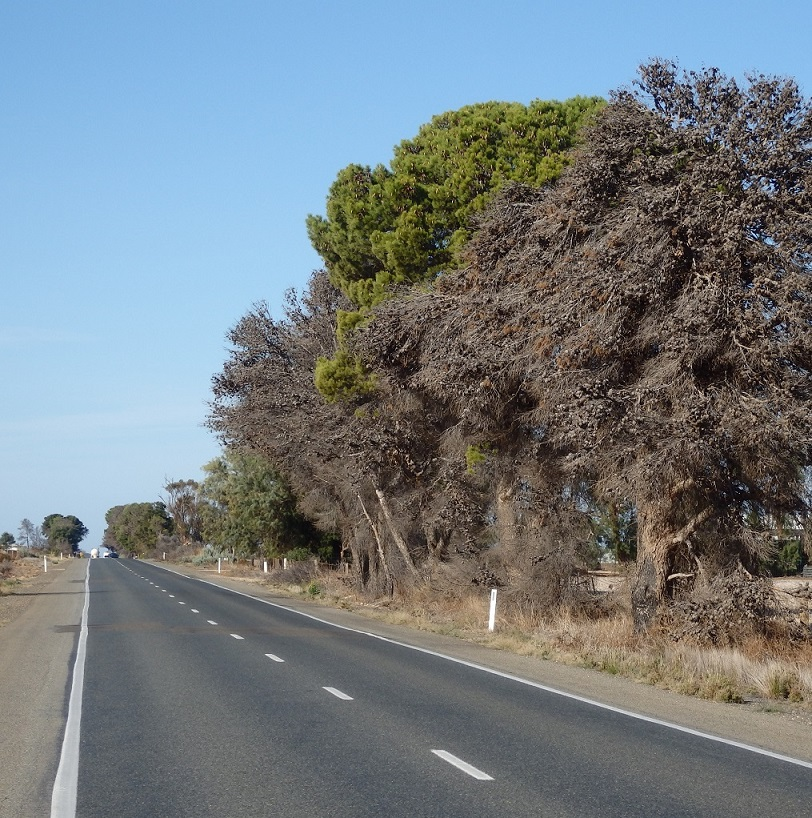 $5.67 Million Roads Investment Confirmed