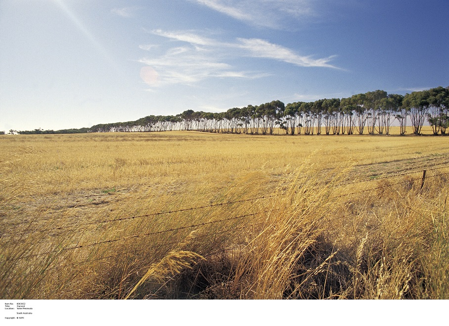 New Award to recognise SA's outstanding Agricultural communities