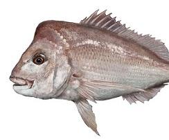 Marine scalefish fishery reform update
