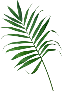 Palm-png.png
