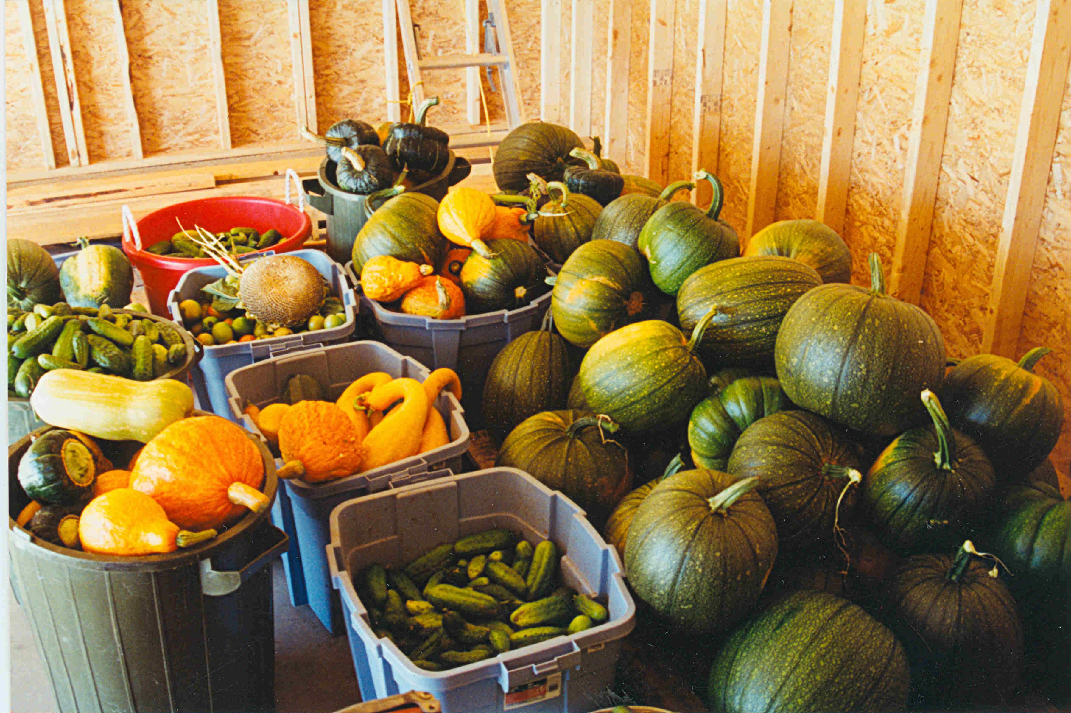 Produce From Petersens Peace Valley Market Garden, circa 1970