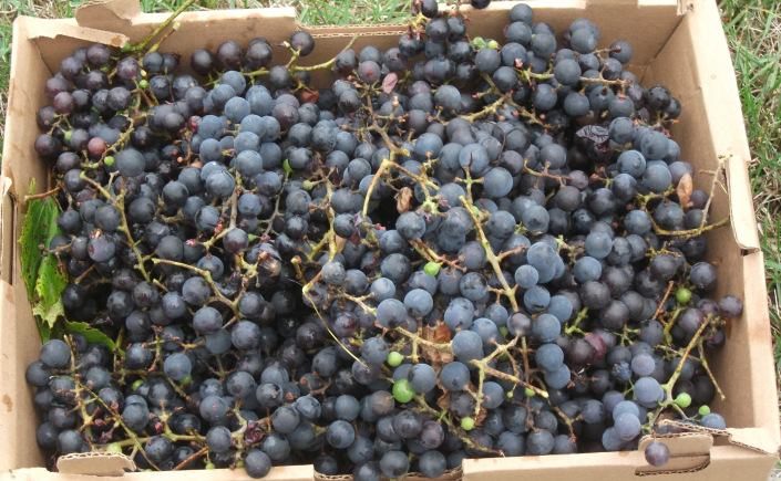 box-of-grapes.jpg