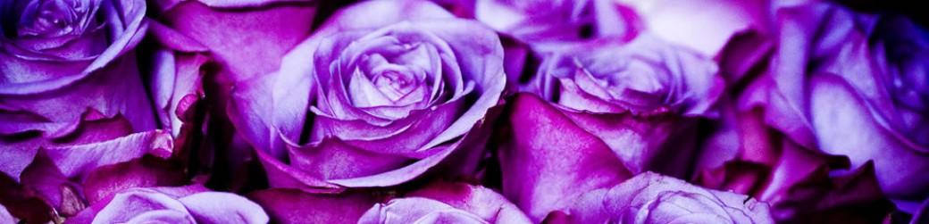 Purple_roses.jpg