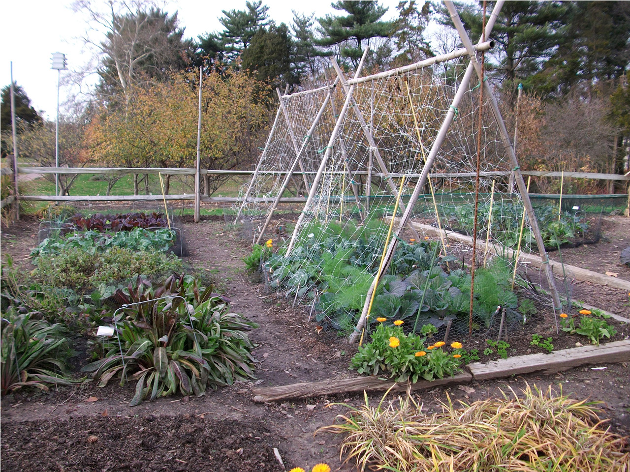 Apply Now For A Free Community Garden! Sunshine Girl Charities Is Excited  To Account That It Will Be Offering Free Gardens To A Select Number Of ...