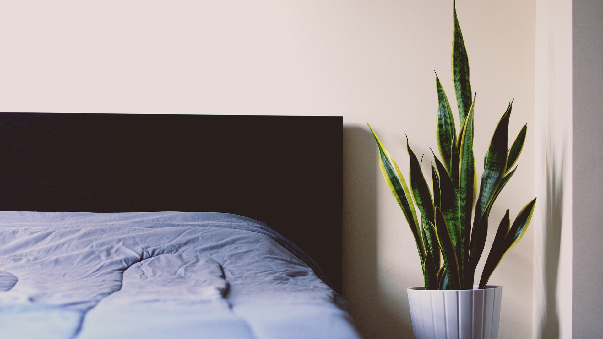 Bed_with_plant.jpg