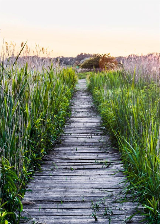 Natural_pathway_Korten.png
