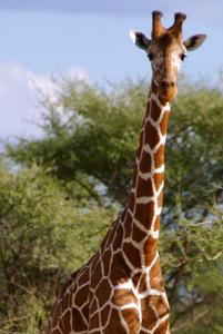 foundation_giving_giraffe.jpg