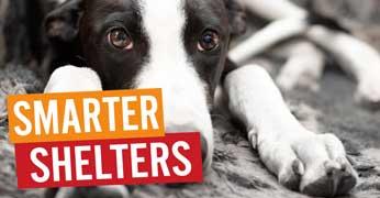 Smarter-Shelters.jpg