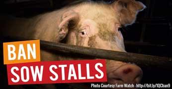 Ban-Sow-Stalls.jpg