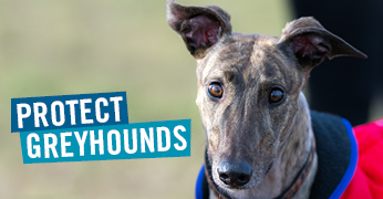 protect_greyhound_campaign.jpg