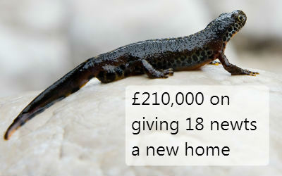 £210,000 on giving 18 newts a new home