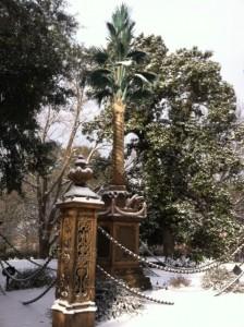 palmetto tree in the snow