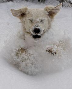 snowy_dog.jpg