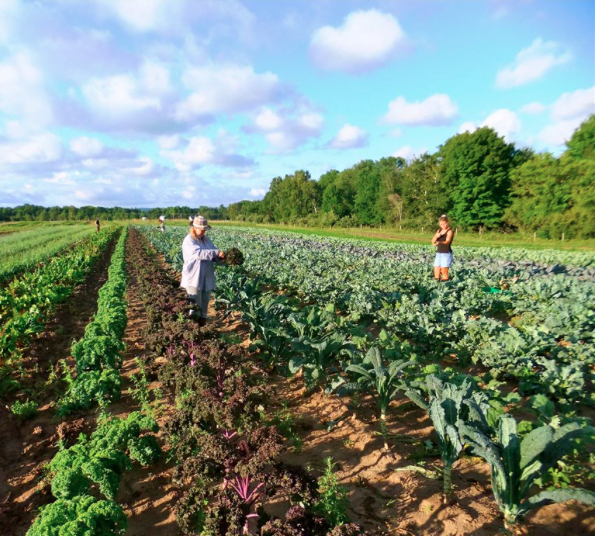 Farmers at Providence Farm Field