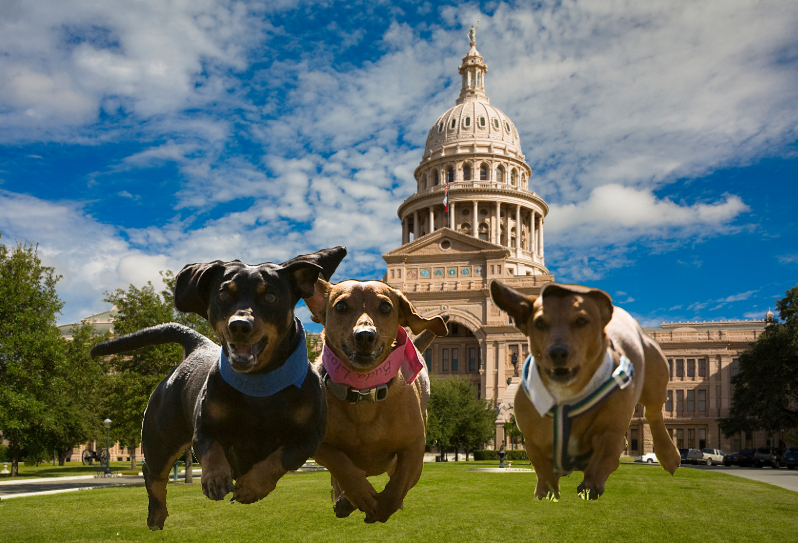 Texas Governor Signs Cruelty Bill!