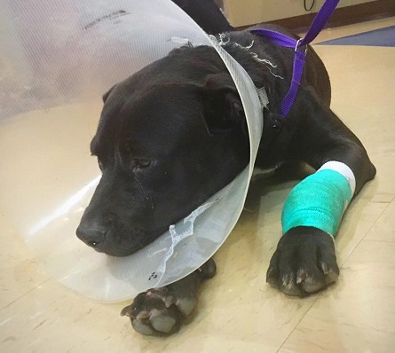 Developing: Advocates Plead for Justice in San Antonio Cruelty Case