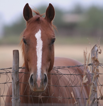 URGENT UPDATE: Texas Horses Need Your Call TODAY!