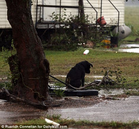 Chained Dogs affected by Hurricane Harvey need your voice!