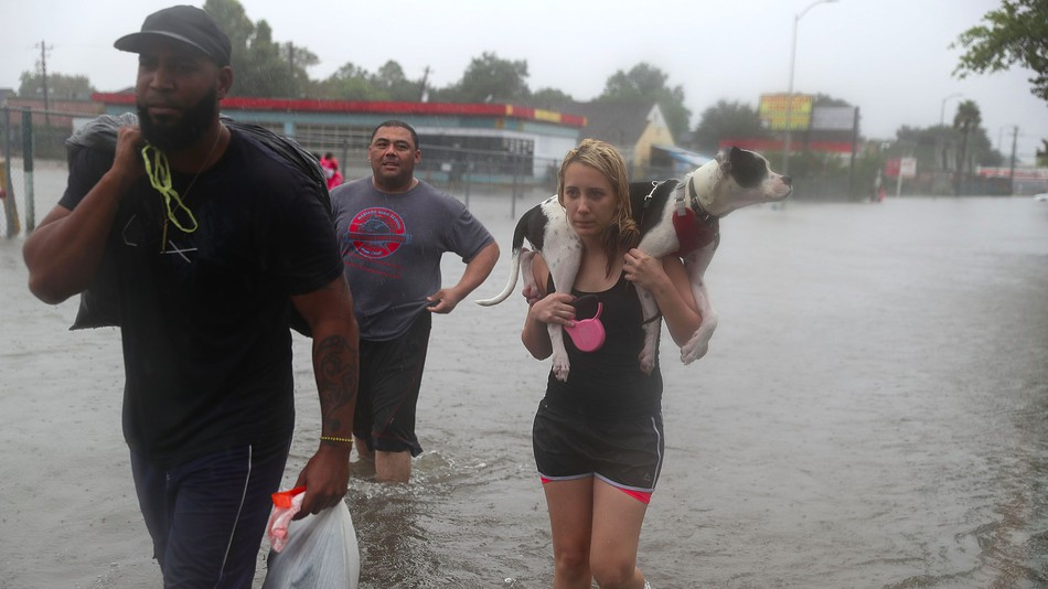Pet Evacuation Requirements in Texas Natural Disasters
