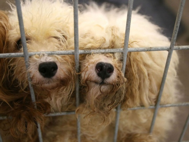 Update: Couple Arrested in Connection with Northeast Texas Puppy Mill