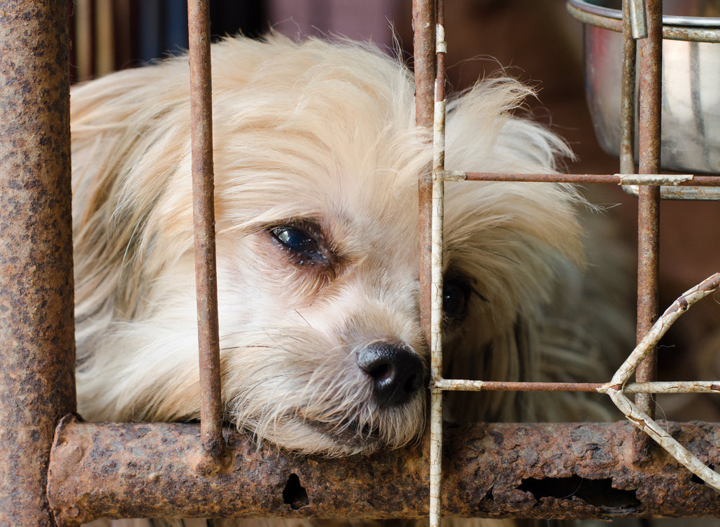 Urgent Action Needed for Texas Animals!