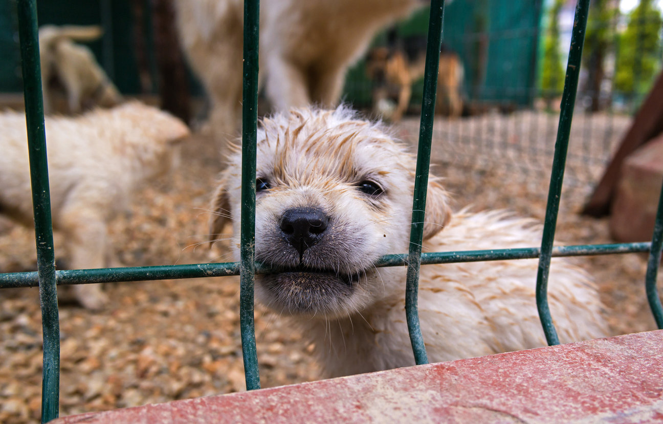 It's Time to Strengthen Our Puppy Mill Laws, and You Can Help!