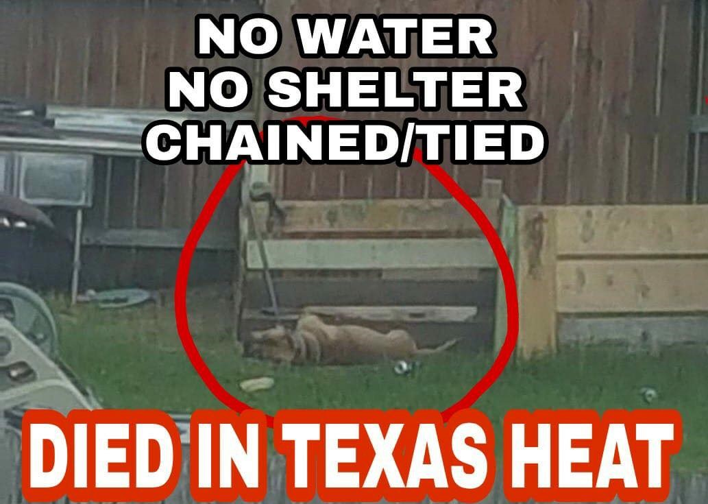 Help end dog chaining in Texas now!