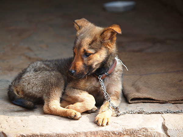 Renewed Bipartisan Push Begins to Reduce Suffering of Texas Dogs
